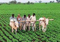 पीएम किसान योजना के मिल रहे है अलग से तीन फायदे ,जाने कैसे उठाये लाभ